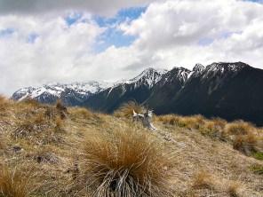 SBealey Spur, Arthur's Pass NZ