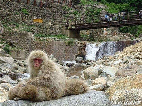 Le parc aux singes