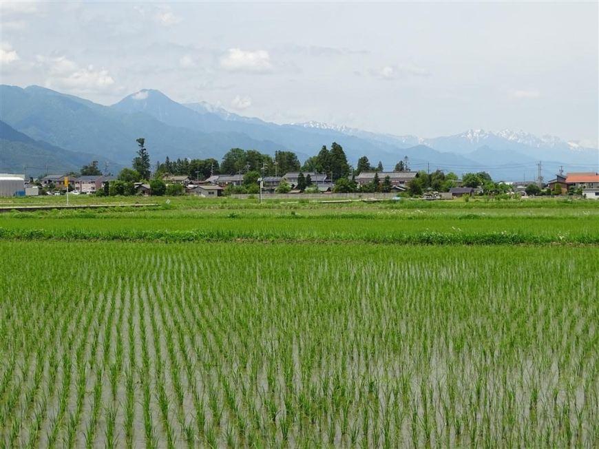 rizieres-campagne-azumino