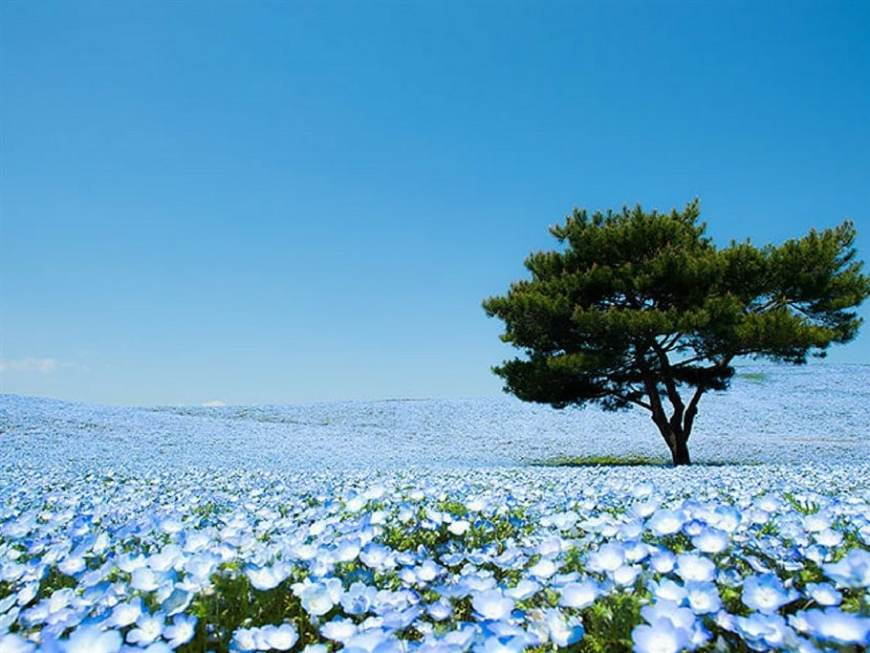 hitachi-seaside-park