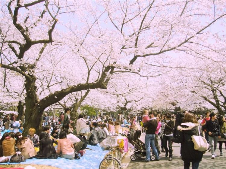 Un hanami à Yoyogi