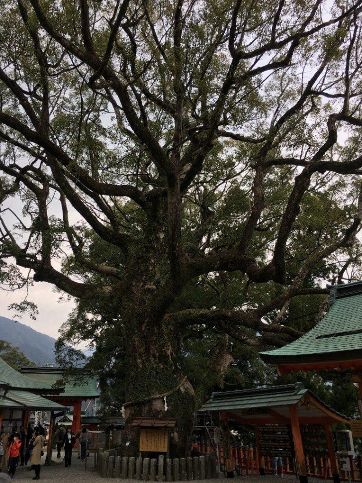 熊野那智大社 (32) (1024x768)