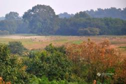 View from watch tower at Sundarbans
