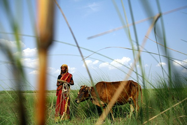 A lady with her cow on a char at Sariakandi