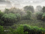 Mystic Sundarbans. Photo: Masba Mazumdar