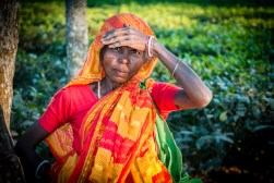 A tribal tea worker on the garden