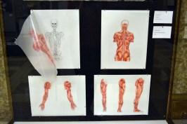 anatomy sketch book