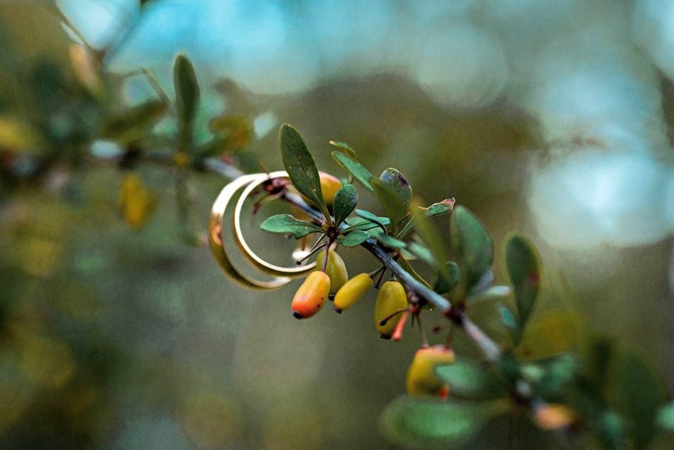 фото кольца на свадьбу