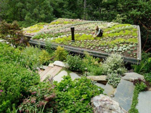 Memanfaatkan Atap untuk Bercocok Tanam Tanaman Taman yang Hijau