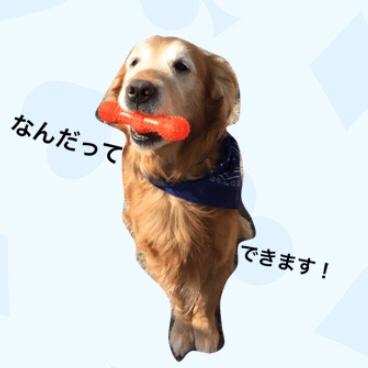 更年期ダイエット(30日間プランクチャレンジ!)