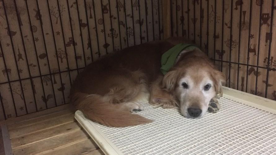 祝【300投稿】越え!雑記ブログ【愛犬と人〜ナチュラルネイチャー】今月は【400越え】目標!