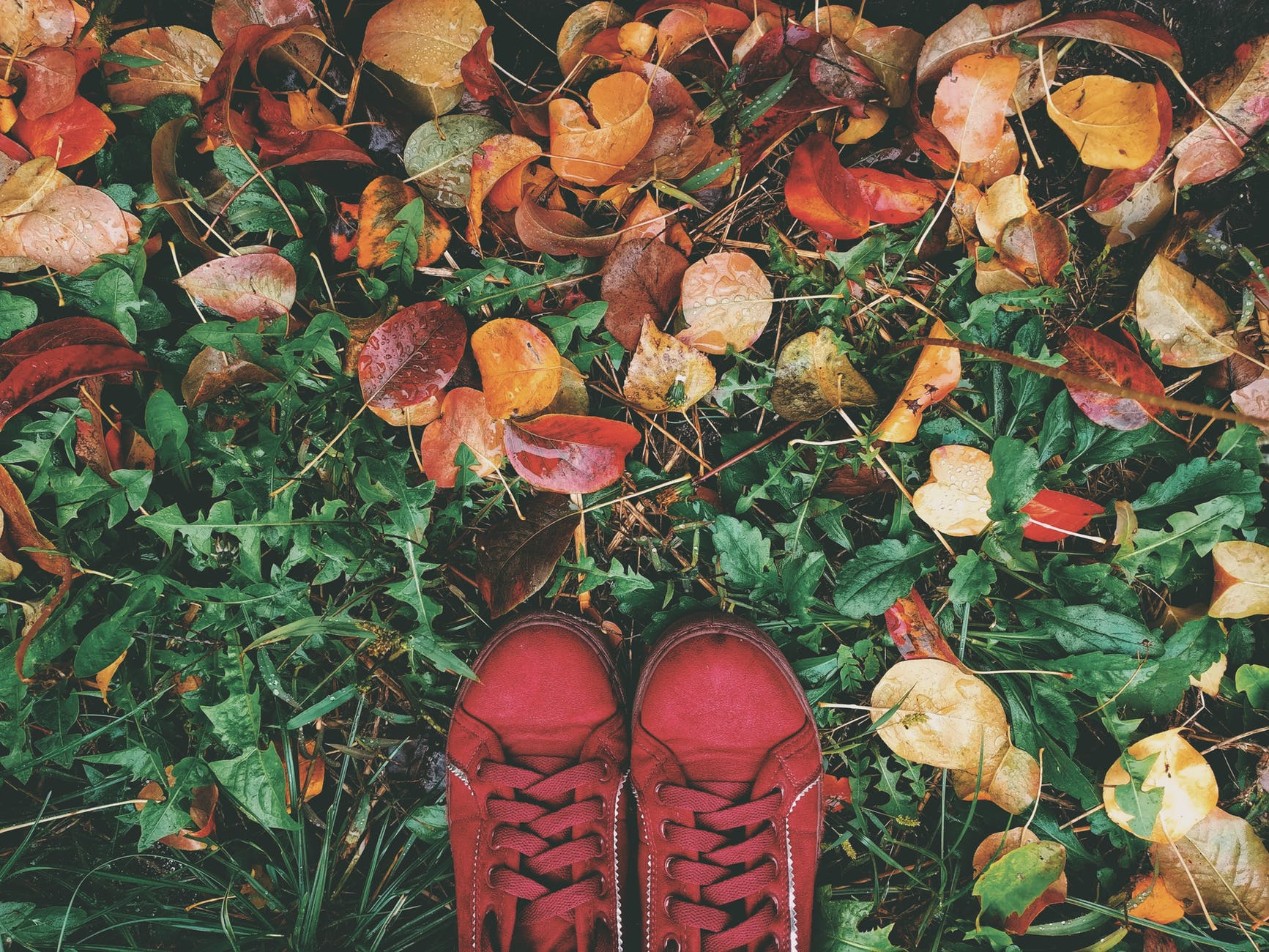 high angle photo of person wearing red sneakers