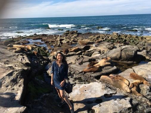 Sea Lions at LaJolla Cove