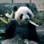 パンダ自身とは?光文社発行のパンダ愛あふれる写真集だった!