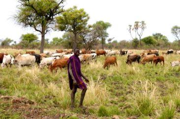 Mursi man with his flock