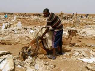 Time to carry the salt
