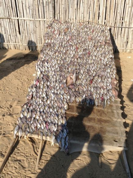 Fish drying in the village