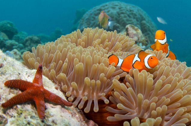 More Barrier Reef