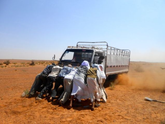 Camels are better than trucks in the desert...