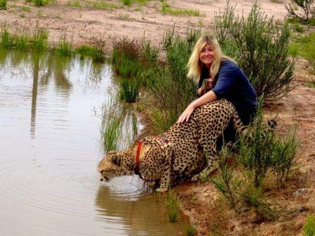 Cheetah love