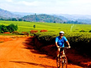 Tea estate cycling