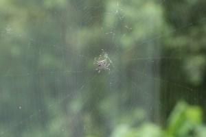 花壇に巣を作ったクモ