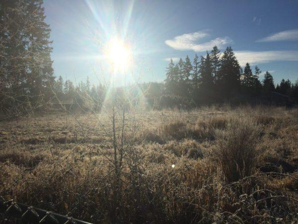 シアトルの湿地