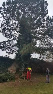 Baum (13)