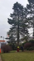 Baum (2)