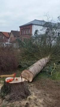 Baum (4)
