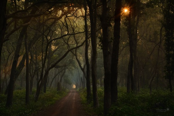 Nikon D500 and a D7100 go to the misty Terai forests near ...