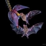 Fotografare la fauna selvatica con un'antica fotocamera DSLR – di Des Ong