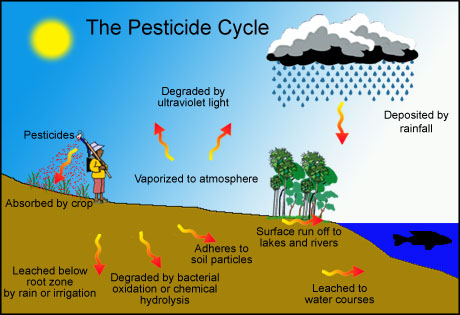effects pesticide use Because of this, pesticide residue on the foods you eat can have an effect on your health though the government regulates pesticide use, residues are still found in our food supply video of the day.