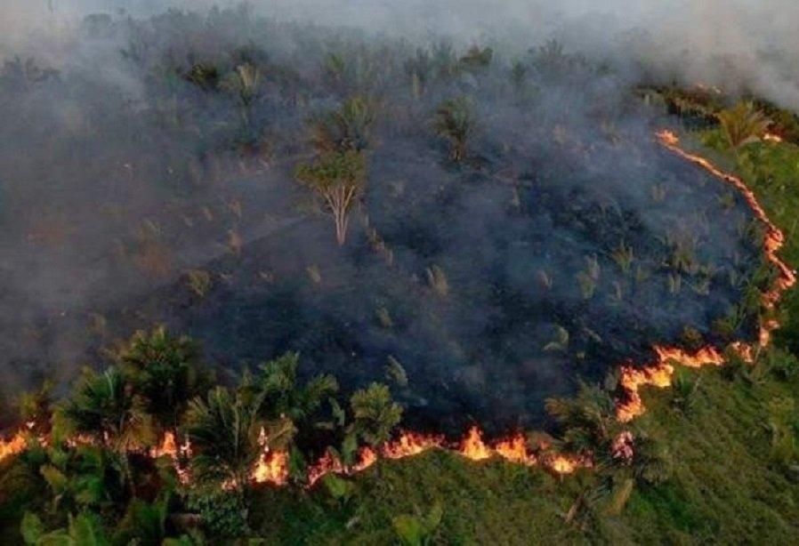البرازيل  |  ارتفاع كبير في حرائق  «الأمازون»