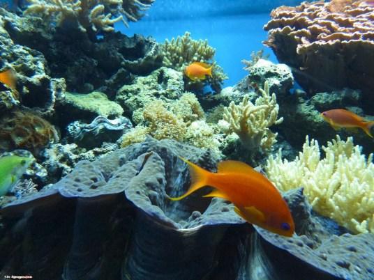 Photo Gallery: Monterey Bay Aquarium, Monterey, California, USA