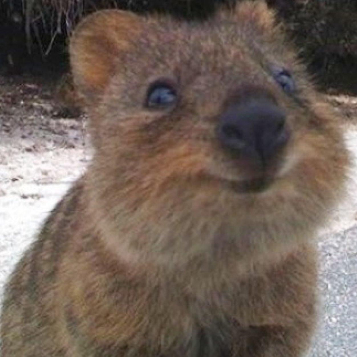 Kısakuyruklu Kanguru Gibi Olun
