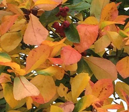 Lyskassen med de flyvende blade