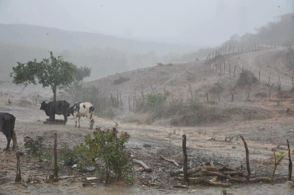 Resultado de imagem para chuva sertão