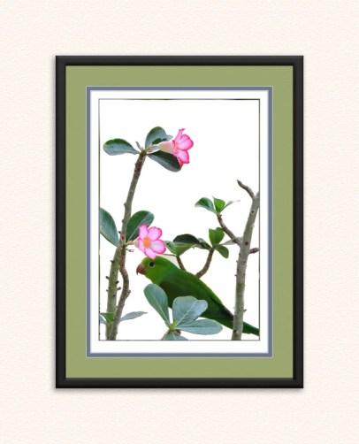 Desert Rose and Parakeet Rich1
