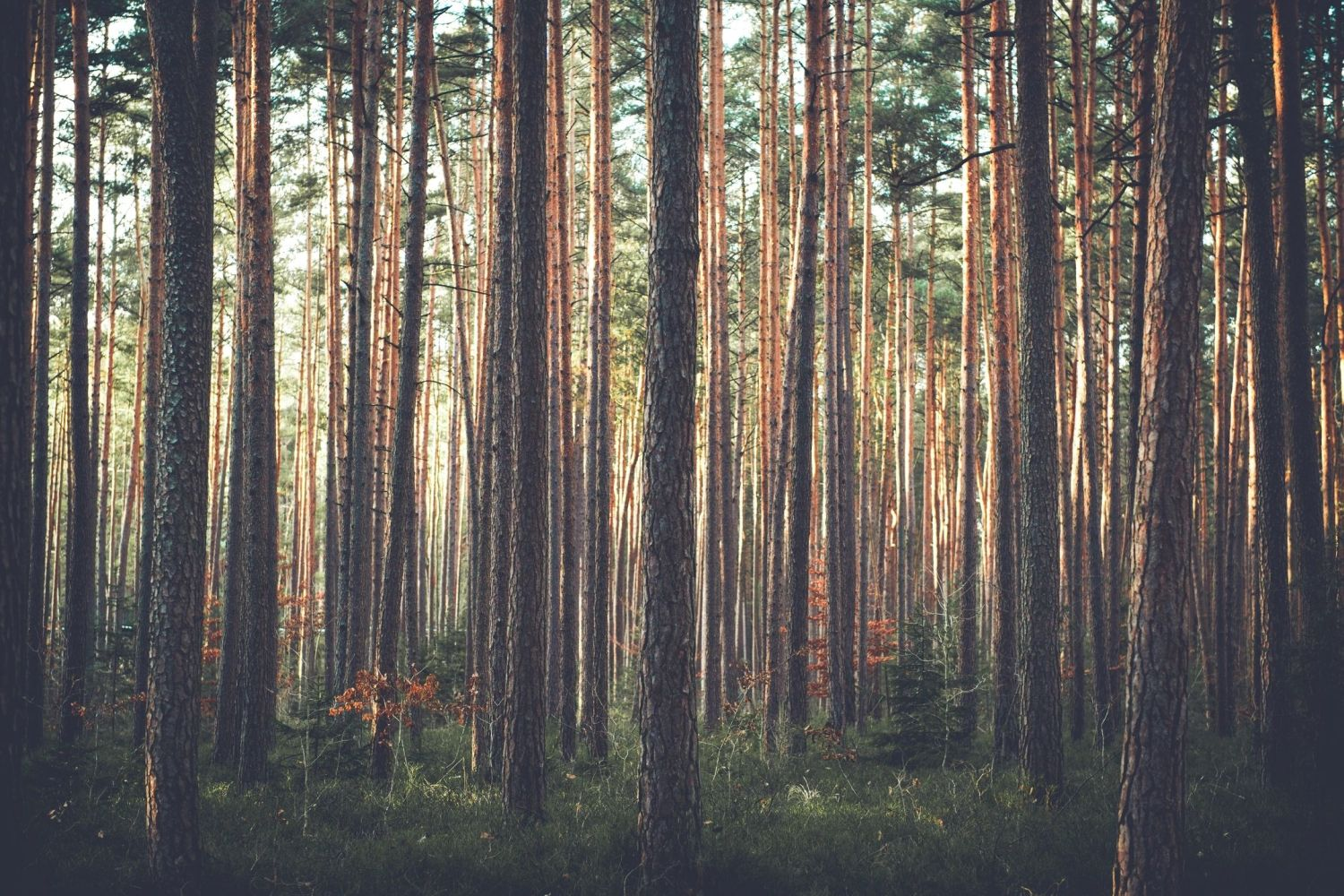 cant-see-trees-through-forest