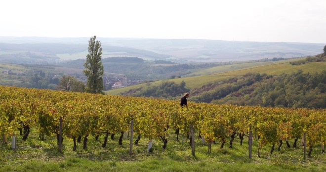 weekend en Bourgogne, vignes d'Irancy