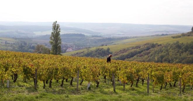 weekend en Bourgogne, vignes d'Irancy