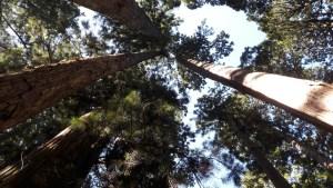 arbres Okunoin, Koyasan