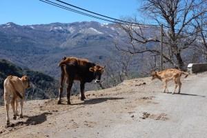 Corse, Castagniccia