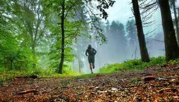 Ultraläufer im Wald