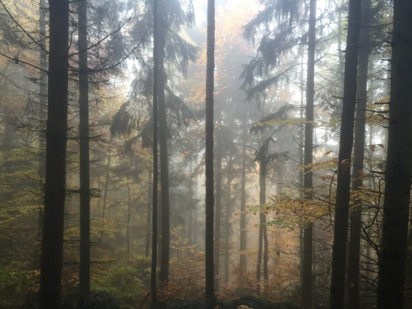 forrest in the fog