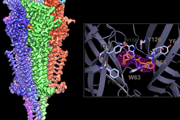 High-Resolution Electron Microscope Reveals Interactions Between Drugs and Receptors