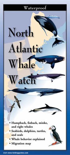 North Atlantic Whale Watch – Folding Guide