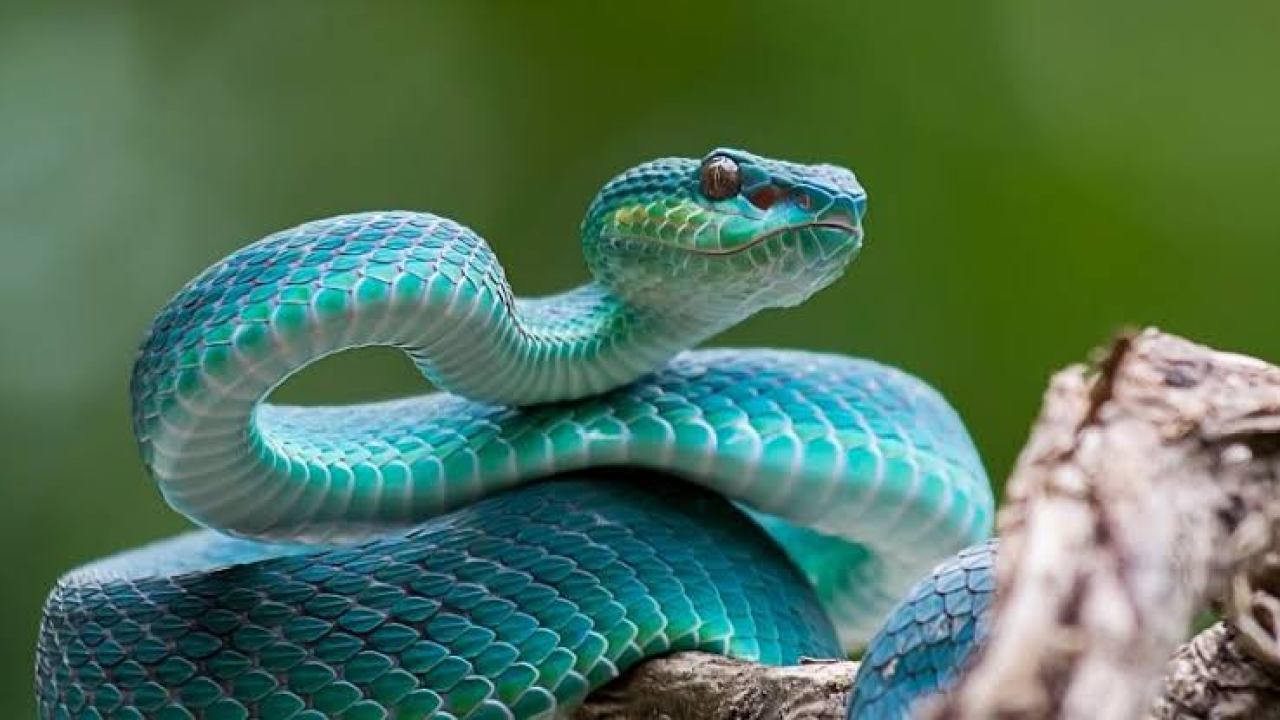 Natural snake repellents: 10 plants that repel snakes