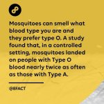 Mosquitoes and blood group